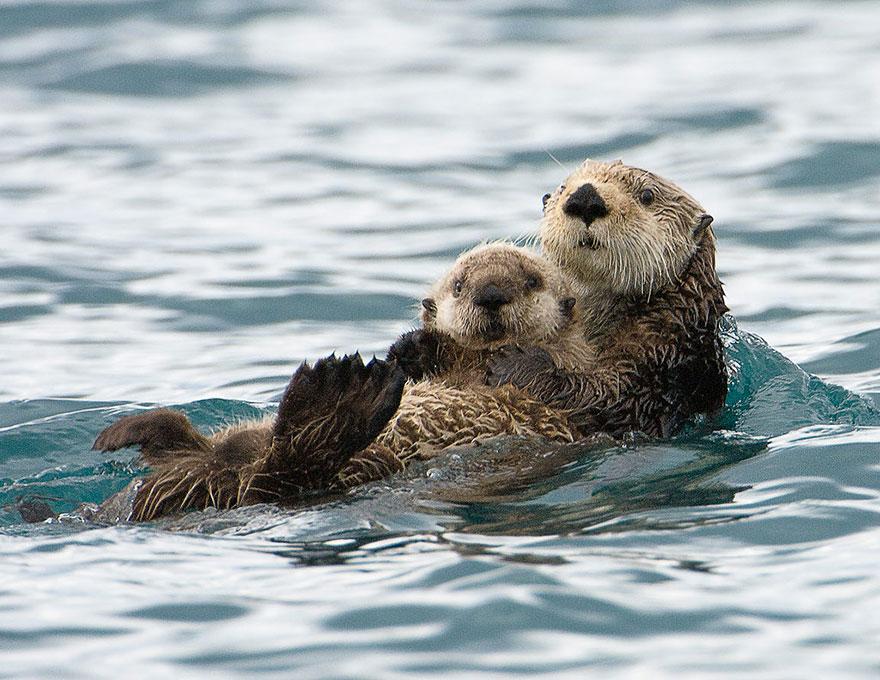 baby beaver bath