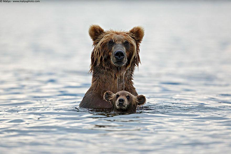 baby real bears