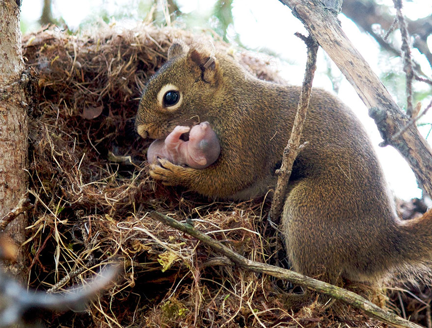 baby squirrel pet cute