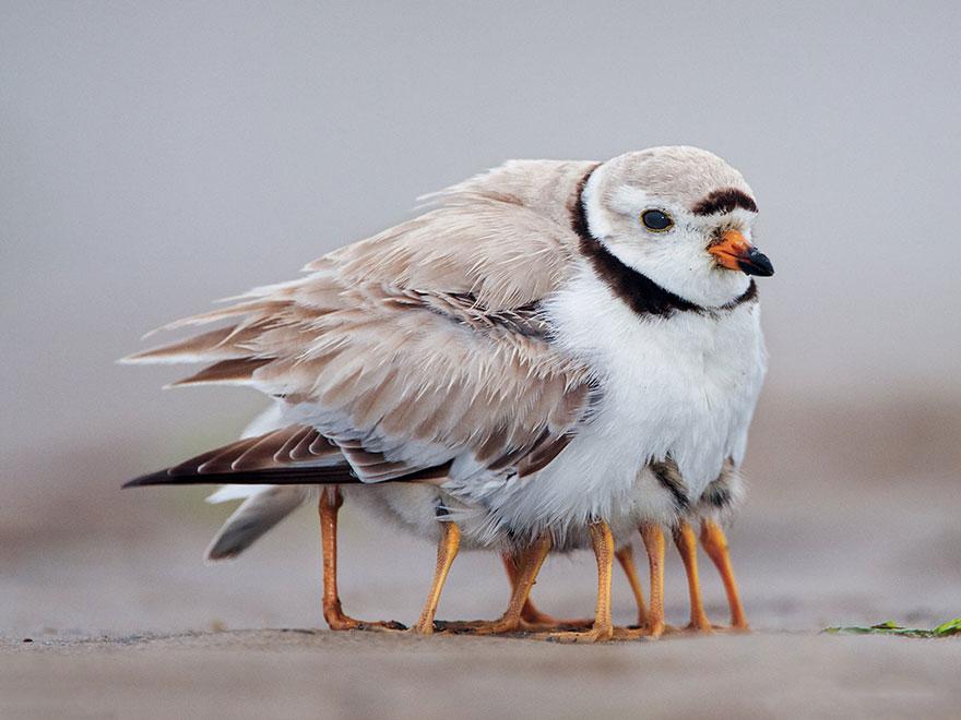 birdie num num